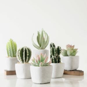 Set of 3 Cactus in Cement Pot