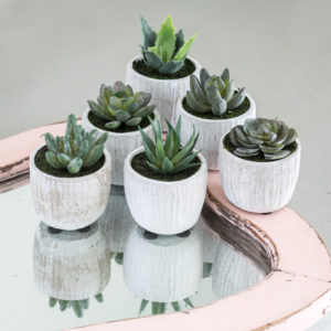 Set of 3 Cactus in Grey Pot