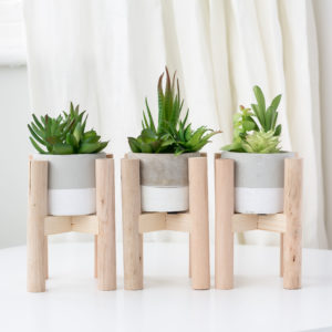 Cactus in Wooden Holder