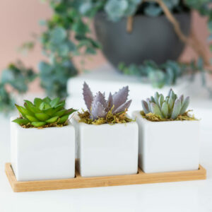 Set of 3 Succulents With Wooden Tray